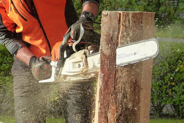 entreprise d'abattage d'arbres